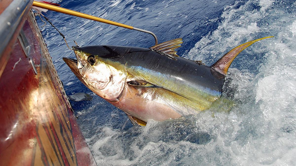 Pesca, Calabria e Sicilia chiedono nuove regole per il tonno rosso