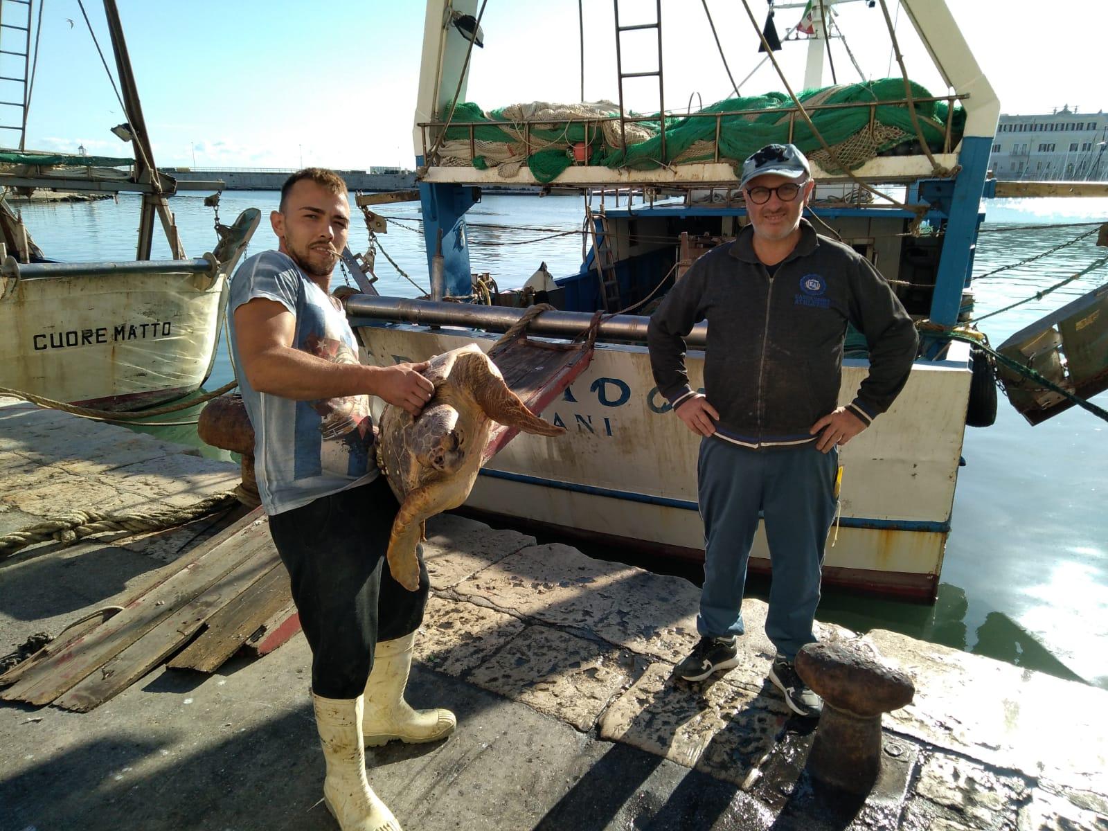 Ad ottobre 26 tartarughe marine curate nel Centro recupero WWF Molfetta