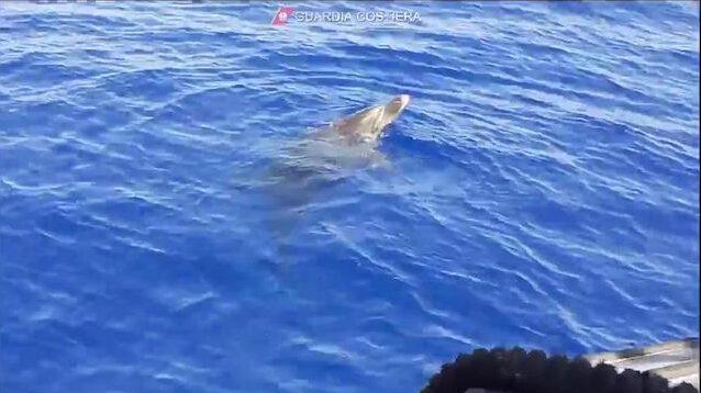 delfino trapani